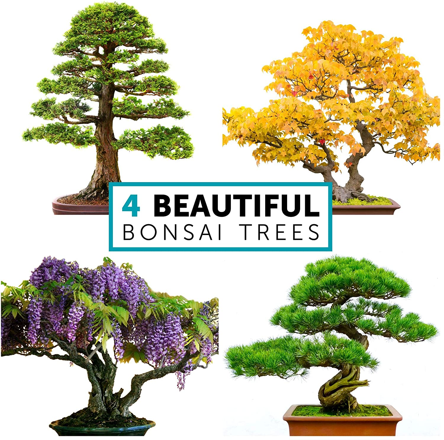 Bonsai Tree Kit Includes Pots Seeds Soil Pellets Markers Instructions Booklet Diy Bonsai Growing Kit Beginner Friendly Happy Healthy Caregiver