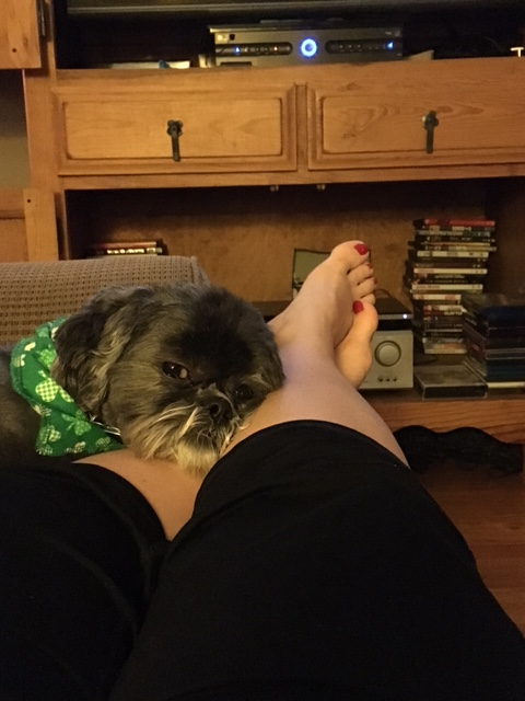 My Shih Tzu Improves My Health And Happiness